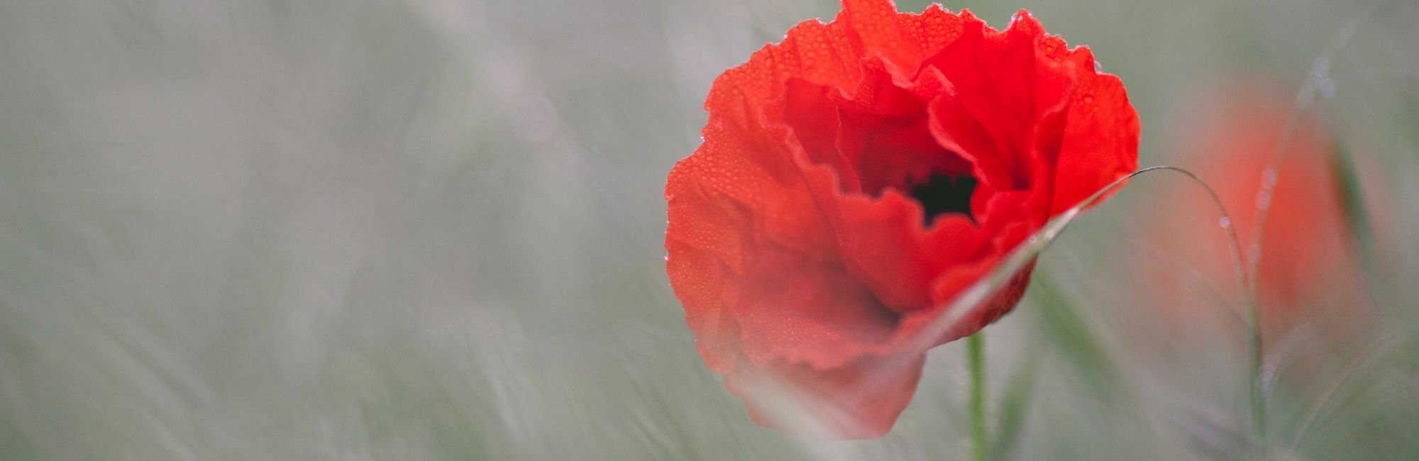 Remembrance Service*Sunday 8th November*More details